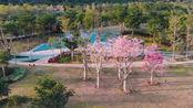 航拍厦门集美与同安之间的新生态公园,有着春意盎然的美丽景色