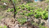 整合农业资源,合作社带头乡村发展