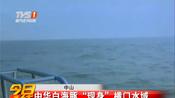 """中山:中华白海豚""""现身""""横门水域"""
