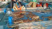 海花岛附近海鲜卖场的帝王蟹多少钱?