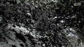 金峨山爬山赏雪