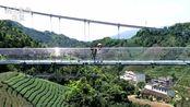 航拍广西贺州第一座玻璃桥,修建在茶山上风景秀丽,你敢上去吗?
