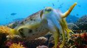 世界上最大的鱿鱼, 长达18米拥有蓝色血液, 网友: 看完涨知识了!