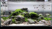 鱼缸中的艺术品,青龙石搭配阴性水草,效果如此漂亮