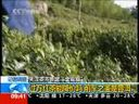 """[视频][关注茶市新宠""""金骏眉""""]过万红茶能降价吗 前车之鉴是普洱"""