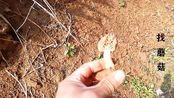 林间采野发现难得一见的蘑菇,听说价钱很贵堪比松露!