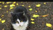 猫咪和银杏很配哦