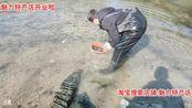 魅力生活_2020-01-29 13时50分收地笼找野菜。
