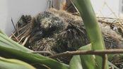 能摸摸鸟宝宝,也是难得的体验