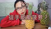 手撕菠萝是骗局?是新品种还是被忽悠了,今天来做个实验!
