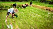 农村种地再迎新福利,4个补贴一项也不会少,农民要尽早办理领取