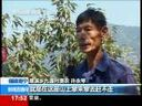 [视频]福建南平:群猴争食锥栗 果农很是烦恼