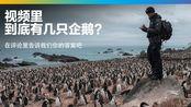 数企鹅挑战,视频里到底有几只企鹅?评论+弹幕写出你的答案