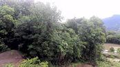 宜昌,长阳土家族自治县,我家屋顶上的风光
