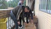王四家蜜蜂又添新成员,蜂大师给它办理入住手续,不愧是专业的