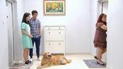 主人没遛狗,邻居却投诉金毛咬伤狗,原来狗自己会坐电梯遛弯!