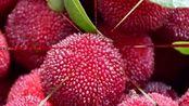 扁桃体发炎了,不用吃中药,多吃这10种水果可以解决