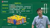 2021年考研西综贺银成西综生理学第02章-细胞的基本功能1