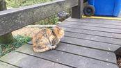 普陀山吸猫1