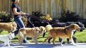 两人微信群里相约遛狗 女子被对方狗咬伤