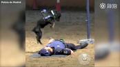 【警员假装倒地:小警犬为他做心脏复苏】西班牙马德里警方6月22日发布一条视频:一名警员假装晕倒后,小警犬Poncho迅速跑上前为他做心脏复苏