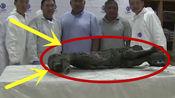 """最古老血液仍在流动!4.2万年前的小马驹,竟有望""""复活""""?"""