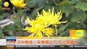 【冬之丰】汉中勉县:采菊南山下 产业致富忙