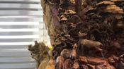 VLOG用树根雕刻出如此巨大的福禄寿木雕,这需要多长时间?