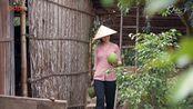 Gi Bi c sn min ty - Khói Lam Chiu tp 15 Pomelo salad Vietnamese reci