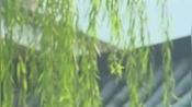 中山市港口镇形象宣传片(二)
