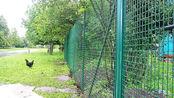 养殖场围墙建造时,用什么建才能省钱?养殖户速速了解
