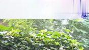 雨后的竹泉村民宿小院,堪称人间仙境!真是让人向往的生活!
