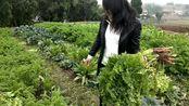四川: 看自贡小妮两姐妹上山摘啥菜?你一定吃过