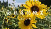 【喵喵与小鱼干】向日葵的微笑 上海市中心也有大片的向日葵
