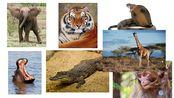 Unit7 Wild Animals Lesson 1