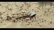 没看错吧,蚂蚁会用铲子了