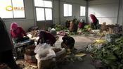 潍坊:高密稳就业保民生 人社部门在行动