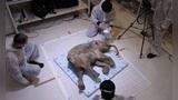 西伯利亚永久冻土层融化,史前动物再现,人类应该做些什么呢