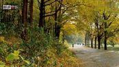 王强《秋天不回来》歌声深情款款,当年响遍大街小巷!