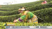 [中国财经报道]四川泸州:春茶上市 价格普遍上涨