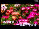 刀郎—艾里甫与赛乃姆 MV 专辑《2002年的第一场雪》