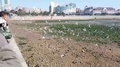 青岛栈桥景区重新开放,成千上万的海鸥汇集于此,真壮观。