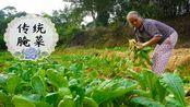 """玉林市传统""""萝卜腌菜"""",阿婆的最爱,做了几十年,吃了几十年!"""