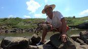 螃蟹聚集排水沟,守着养殖户排出来的鱼虾吃,越吃越肥阿彬抓爽了