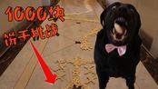 【拉不拉猪】挑战1000块饼干要花多长时间?这狗子面目狰狞,内有饿犬!