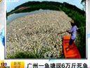 广州一鱼塘现6万斤死鱼 120610 说天下i.zhihuiseo.com