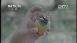 [视频]甘肃天水:伏旱严重 农作物不同程度减产