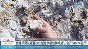 袁隆平团队新疆300亩海水稻试种成功:亩产546.74公斤