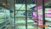 """【记者走基层】石家庄藁城国家农业科技园区:春耕透着""""科技范儿"""""""
