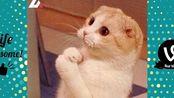试着不要笑--23个搞笑猫咪视频,你会笑死的——油管知名搞笑系列Life Awesome作品